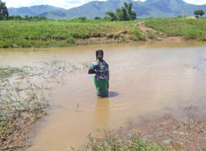 A woman wades through flood waters in southern Malawi's Mulanje District. Photo: Caleb Muchungu IRIN